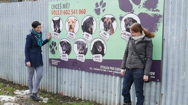 S originálním nápadem přišly přerovská fotografka Iveta Juchelková a grafička Lucie Mazáčová. Nafotily sadu snímků pejsků z místního útulku a jejich fotografie vyvěsily na plotě tak, aby si jich lidé ve městě všimli. Cílem je upozornit na to, že někteří p