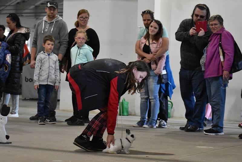 Výstava hospodářských zvířat v Přerově v říjnu 2021. Králičí hop.