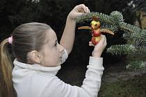 Zdobení vánočního stromu pro ptactvo v přerovské Ornitologické stanici