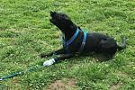 Přerovští strážníci v posledních dnech pomáhali při záchraně zraněných opeřenců i psa.
