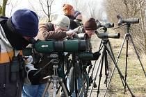 Pozorování ptactva v Tovačově.