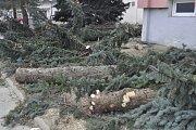 Následkem silného větru popadaly o víkendu i smrky před panelovým domem v ulici Osmek v Přerově.