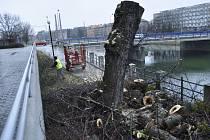 Kvůli svému špatnému zdravotnímu stavu musely být odstraněny také stromy na nábřeží Protifašistických bojovníků.