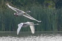 Mláďata Zpěvanky jsou na světě sto dní a v těchto dnech se učí létat