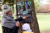 Výstava na stromech v Kojetíně.