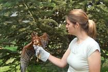 Záchranná stanice pro živočichy při Ornitologické stanici ORNIS a její pacienti