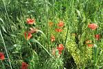 V lokalitě u přerovské hvězdárny vzniká nový biokoridor, který má krajině vrátit její přírodní ráz.