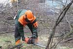 Více než desítka stromů byla vykácena u parkoviště před Priorem. Odstraňování dřevin souvisí s plánovanou rekonstrukcí obchodního domu v Přerově, která by měla začít v dohledné době.