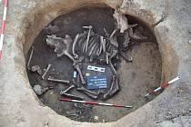 Archeologové našli v sídlištní jámě v Předmostí ostatky nejméně pěti lidských jedinců, jedné krávy a psa. Výzkum na trase dálnice D1 potrvá až do konce roku.