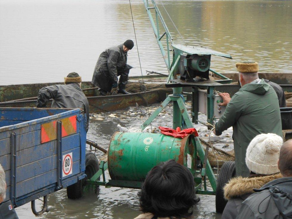 Výlov Hradeckého rybníka si i přes sychravé počasí nenechaly ujít tisíce lidí.