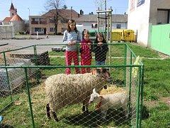 Chovatelská výstava v Horní Moštěnici lákala v sobotu malé i velké návštěvníky.