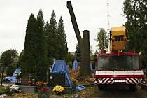 Do rozsáhlé obnovy stromových alejí se pustili v Dřevohosticích.
