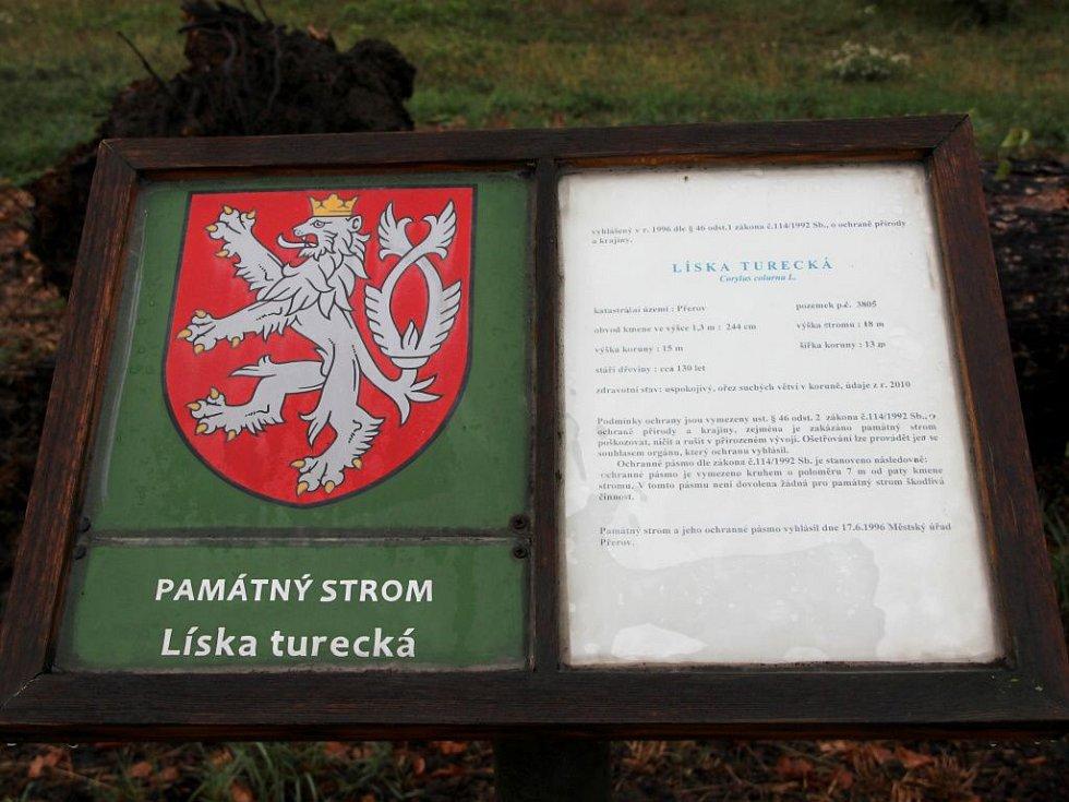 Osmnáct metrů vysoká a sto třicet let stará líska turecká, která je jedním památných stromů na území města Přerova, se skácela k zemi. Strom byl už delší dobu ve špatném zdravotním stavu.
