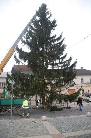 Vánoční strom dovezli na náměstí T. G. Masarka vPřerově vsobotu okolo čtrnácté hodiny. Smrk vysoký zhruba dvaadvacet metrů absolvoval cestu zPotštátska.