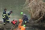 Odstraňování kmenů u čistírny odpadních vod v Henčlově