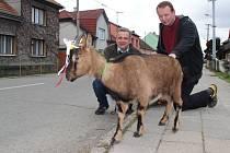 S nezvyklým doprovodem se vydal v pondělí na velikonoční pomlázku Pavel Galeta z Týnu nad Bečvou. Mašličkami nazdobená koza kamerunská, se kterou vyrazil na mrsknut, budila pozornost kolemjdoucích.