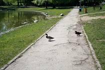 Chodníky na Laguně se dočkají nového povrchu
