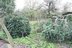 Kriminalisté zadrželi čtyři muže, podezřelé z pěstování konopí setého a distribuce marihuany.