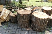 Následky bouřky, která se prohnala ve čtvrtek večer a v noci na pátek Přerovem, byly vidět po celém městě. Například u Základní školy Želatovská v Přerově museli dělníci odstranit letitou vrbu, ale popadané byly i stromy jinde ve městě. Majitelé rodinného