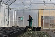 O sazenice ve sklenících se starají v rámci praxe Studenti přerovské Střední školy zemědělské