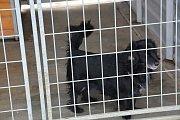 Do Útulku pro zatoulaná zvířata v Dluhonské ulici v Přerově jsme předali dárky, které nám darovali naši čtenáři - deky, pelíšky, granule i spoustu pamlsků.
