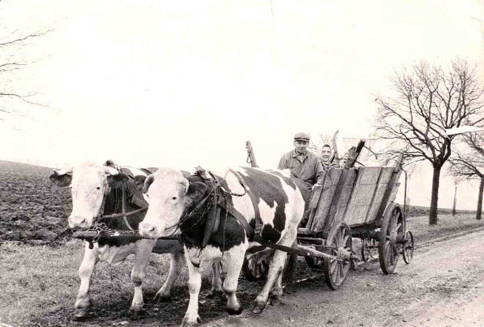 Na fotografii z roku 1960 jsou zachyceni manželé Hrdličkovi – soukromí rolníci v Tučíně.
