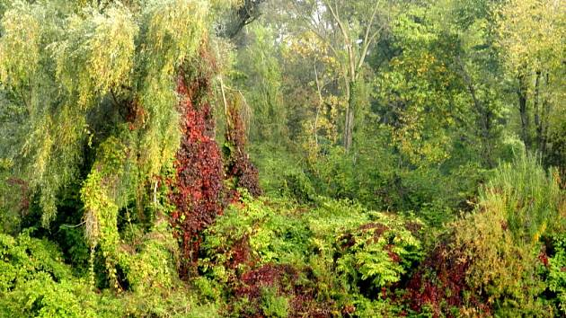 Pravý břeh řeky Bečvy v Přerově na podzim