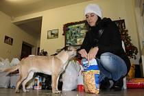 Redakce Nového Přerovska uspořádala i letos sbírku pro Útulek pro zatoulaná zvířata