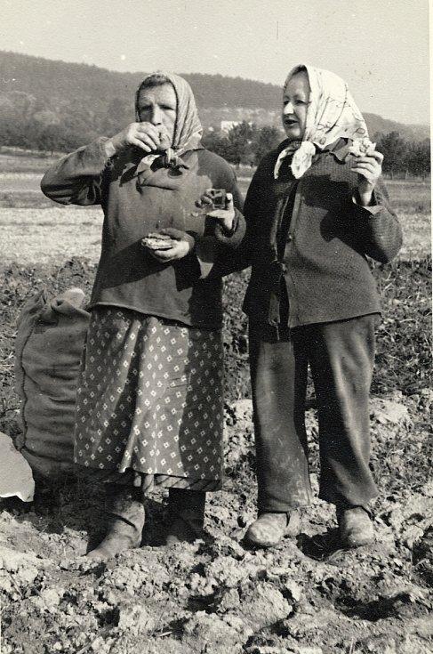 VeVeselíčku se uměli lidé vždy bavit, nejen ve spolcích, ale i při práci. Nechyběla ani zdravotní štamprlička.