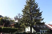 Vánoční strom dorazí tentokrát na přerovské náměstí z ulice v historické části města - Pod Valy