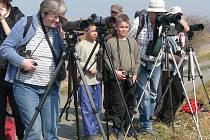 Ornitologové uspořádají v sobotu 27. dubna akci Vítání ptačího zpěvu u tovačovských rybníků.