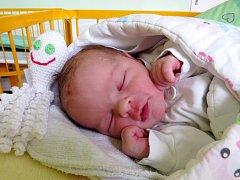 Julie Zemanová, Kladeruby, narozená dne 10. ledna 2018 v Novém Jičíně, míra: 50 cm, váha: 3290 g