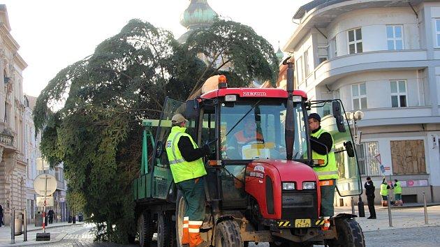 Převoz a instalace vánočního stromu v Přerově
