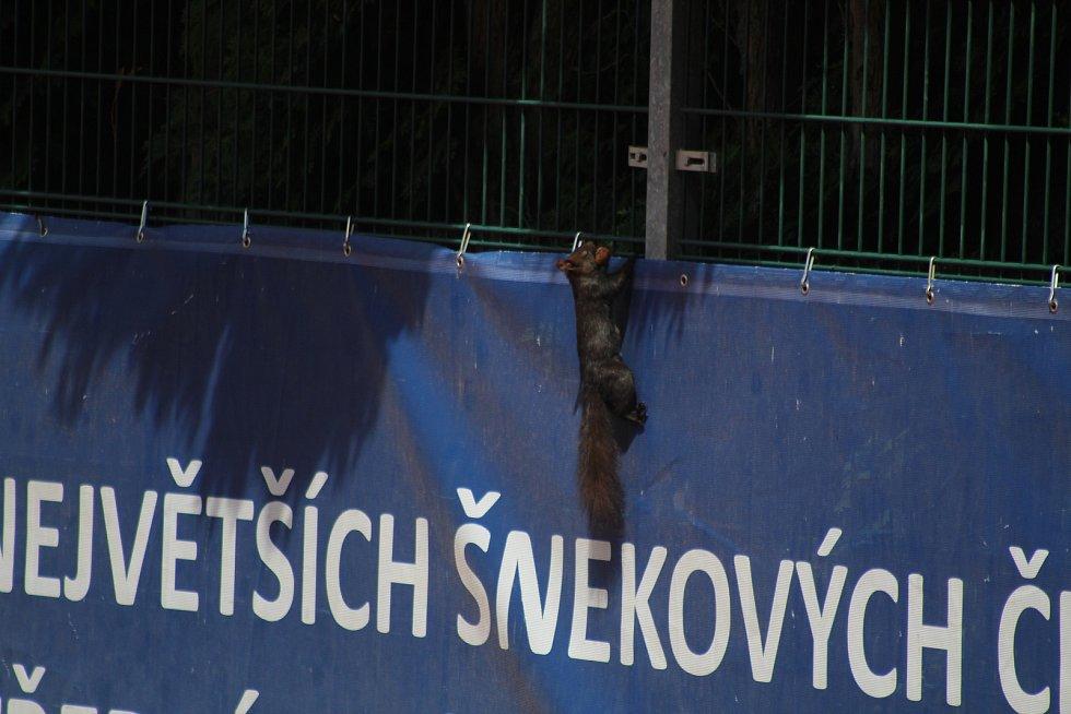 Sobotní finále čtyřhry Zubr Cupu. Kubáňová/Tomanová (obě ČR) – Mandelíková (ČR)/Morginová (RUS) 6:4, 7:6(2). Na kurtu se objevil nezvaný host.