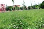 Lidé v Přerově si stěžují na neposečenou trávu - nejvíce vadí pejskařům.