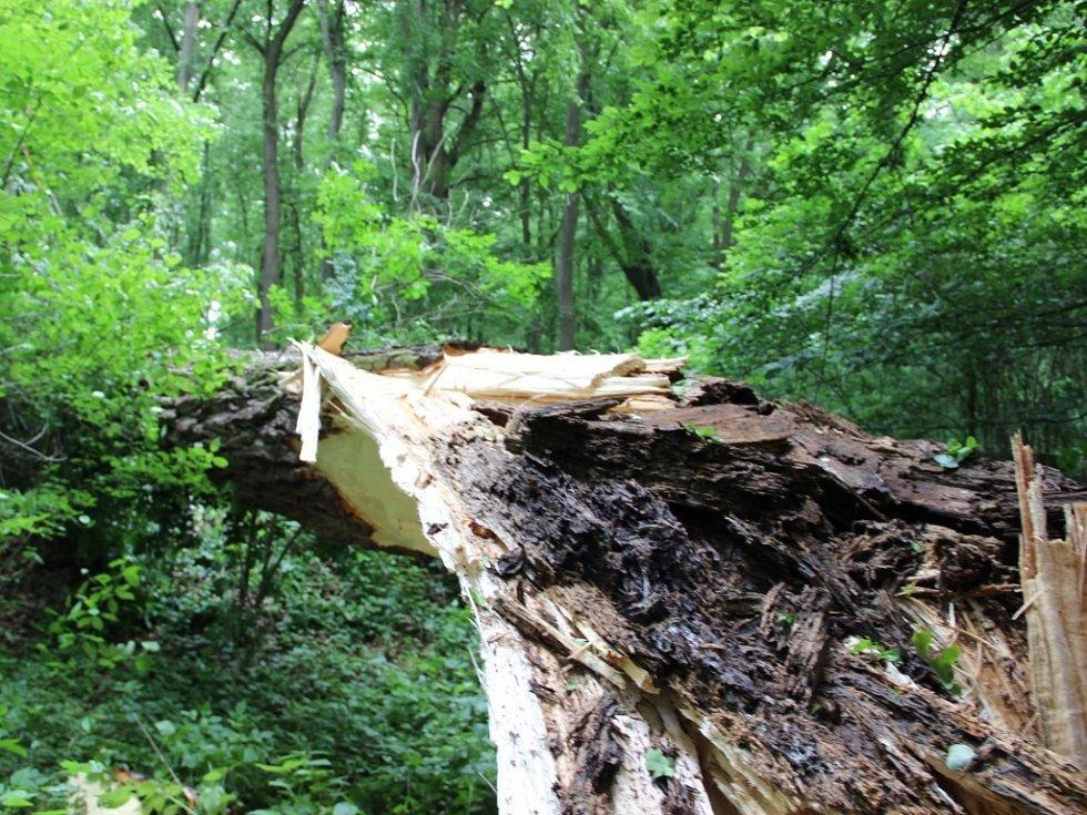 Pád stromu mezi Troubkami a Vlkoší