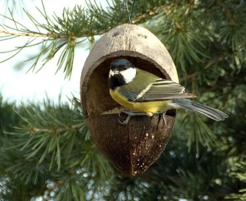 Pozorování ptáků u krmítek z kokosového ořechu