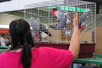 Výstava exotického ptactva na přerovském výstavišti