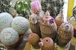 Výstava kaktusů a sukulentů u přerovského výstaviště