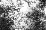 Zapomenuté snímky z přerovského fotoateliéru Vojtěcha Leftuse zveřejní Výstavní síň Pasáž v Přerově v rámci výstavy Skleněné vzpomínky