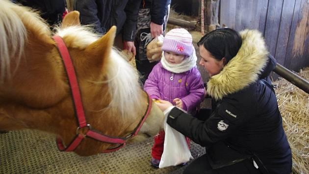Vánoční krmení koní v areálu Střední školy zemědělské v Přerově
