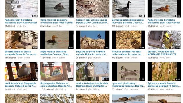 """Ptačí videokanál přerovských ornitologů, na kterém je možné pozorovat """"v akci"""" nejrůznější druhy opeřenců, už zhlédli lidé z celého světa."""