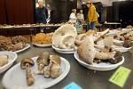 Výstava hub v přerovském klubu Teplo.