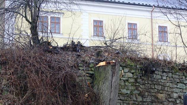 Město nechalo lípu pokácet, když jedna z větví neodolala náporu větru. Miroslav Kosňovský si přesto myslí, že padla k zemi zbytečně.