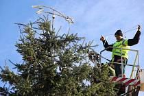 Na náměstí T. G. Masaryka v Přerově už zdobí do svátečního vánoční strom, který přivezli v sobotu pracovníci technických služeb z Jižní čtvrti.
