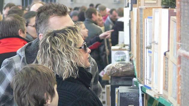 V neděli 13. března se sešli chovatelé exotického ptactva na výstavišti v Přerově.