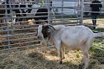 Okresní dožínky a celostátní výstava drobného zvířectva na přerovském výstavišti