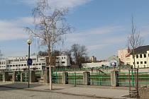 Přerované kritizují úbytek zeleně ve městě a podepisují se kvůli tomu pod petici. Nedaří se ani břízám v lokalitě na Spálenci. (na snímku)