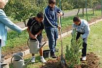 Žáci a učitelé přerovské Základní a mateřské školy Malá Dlážka sázeli Strom míru