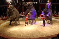 Indické slonice Maia, Deli a Laika z Cirkusu Humberto ohromí nejen svým vzhledem, ale i výkony. Za jejich drezúrou stojí manželé Armando a Ramona Renz